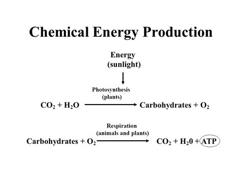 carbohydrates in energy production metabolism definition sum of all chemical reactions in
