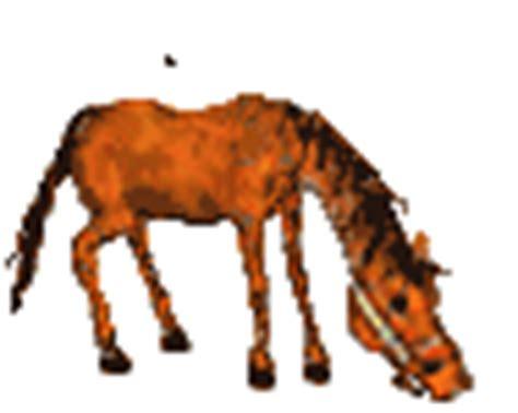 imagenes gif yegua gifs de caballos en el establo animados y yeguas al galope