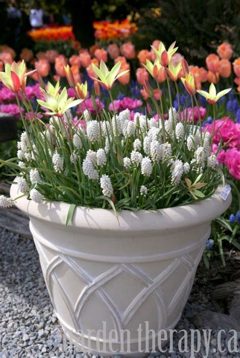 fabulous fall flower containers six fabulous spring containers from the garden charmers