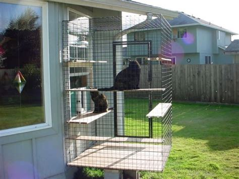 safe  smartly organized outdoor cat areas digsdigs