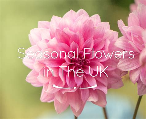 Flowers Uk by Seasonal Flowers Flower Pressflower Press