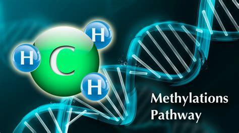 Methylation Side Effects Detoxing Urine by Understanding Methylation Drjockers