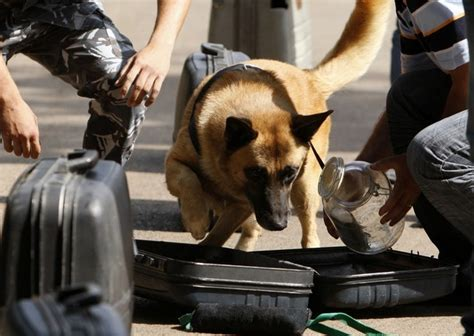 sniffer dogs small breeds the most complete information about small breeds