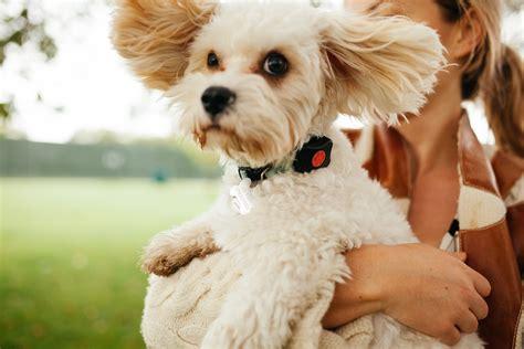 pet insurer hands   doggy fitbits  money