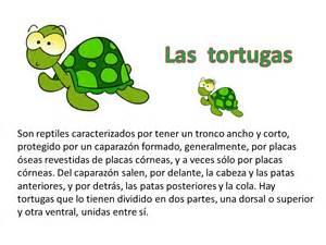 imagenes de ciclo de vida de la tortuga la tortuga lecturas primaria