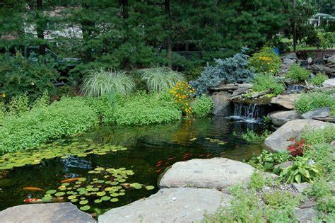 Aquascape Nj by Fish Koi Pond Contractor Bergen Passaic Essex Morris New