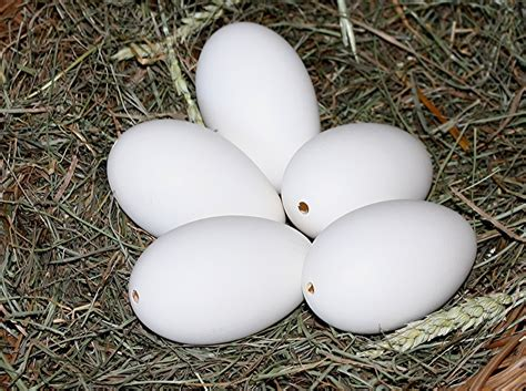 what color are canada goose eggs