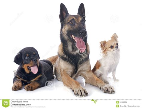 three dogs three dogs royalty free stock images image 34908629