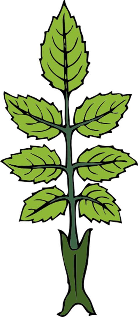 mint leaf coloring page mint leaf clouring clipart best