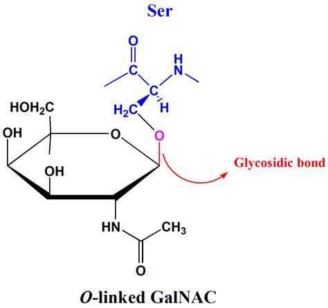 carbohydrates oligosaccharides glycosidic bond