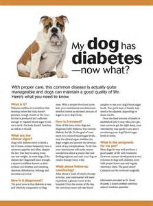 dog diabetes treatment natural 75 best images about dog care info on pinterest for dogs