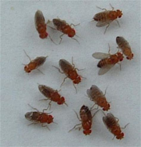 fruit fly like bugs in bathroom the kitchen has been compromised confessions of a stay