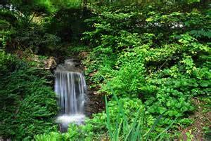 Botanical Gardens South Carolina Gardening South Carolina Botanical Garden
