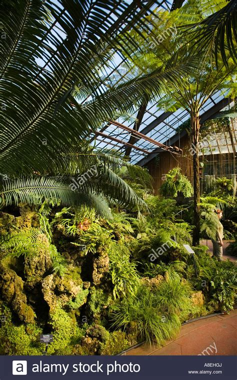 Free Parking Near Chicago Botanic Garden Chicago Illinois Fern Room At Lincoln Park Conservatory Plants Grow Stock Photo Royalty Free