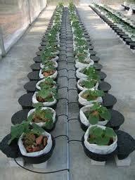 Lu Gantung Kecil anim agro technology cocopeat