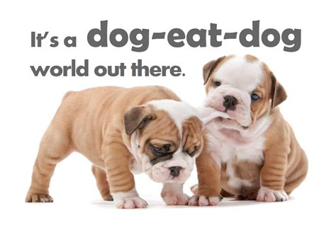 puppy ate survival of the fittest how to come out on top in the eat world of e