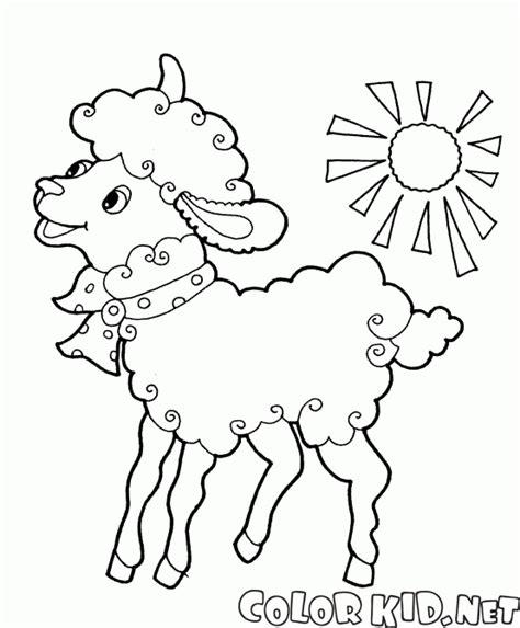 imagenes para dibujar de ovejas disegni da colorare pecora con larco