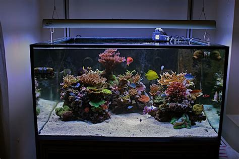 aquascape ottawa aquascaping show your skills page 5 reef central