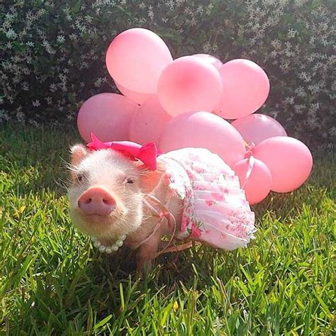 Decorating Your Home For Fall by Meet Priscilla The Fashionable Micro Pig Cute Animals