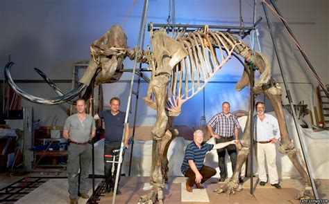 fishing for fossils in the north sea the lost world of doggerland 40 000 year old woolly mammoth bones discovered at the