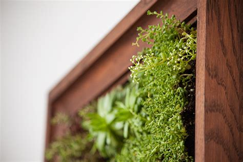 how to make vertical garden wall how to make a vertical garden the crafty gentleman