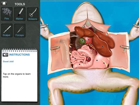 anatomy coloring book app frog dissection punflay curriculum