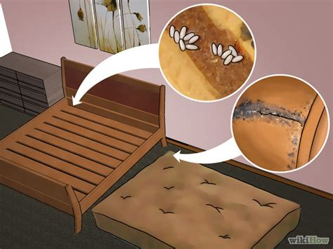 how to get rid of bed bugs fast how to get rid of bed bug get rid of bed bugs bed bug furniture removal services