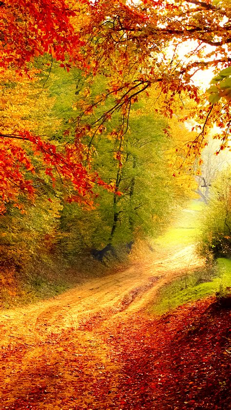 free mobile pictures autumn bend hd wallpaper for your mobile phone