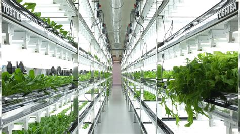 indoor grow room toshiba s high tech grow rooms are churning out lettuce that never needs washing quartz