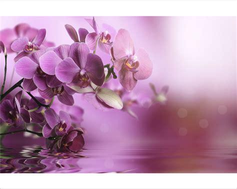 Snoopy Wall Stickers orchidee sull acqua fiori stampa su tela