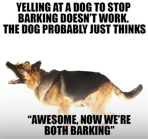 how to get my to stop barking how to get your to stop barking barking awesome and language
