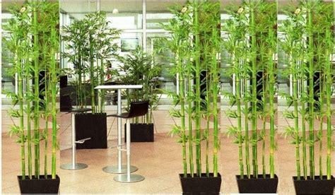 piante finte da giardino piante ornamentali finte piante finte caratteristiche