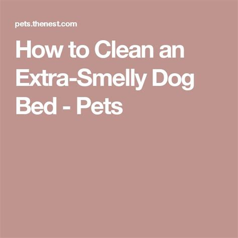 Meer dan 1000 idee 235 n over stinkende hond op pinterest honden hond