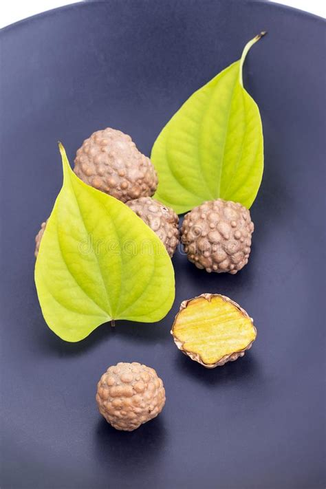 what is the scientific name for air air potato herb scientific name is dioscorea bulbifera stock image image of tropical brown