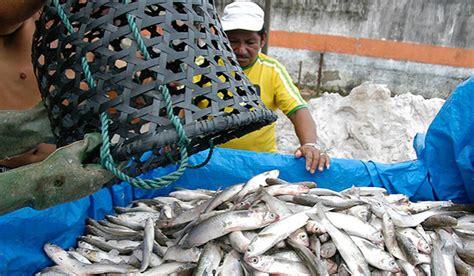 seguro defeso mais de 15 mil pescadores do acre ficar 227 o sem receber
