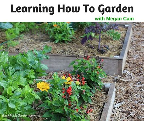 learning how to garden with megan cain back to my garden