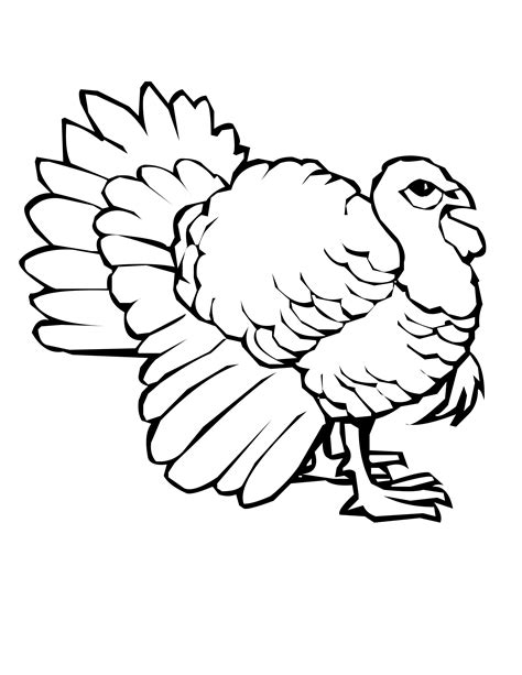 coloring pages of turkeys for thanksgiving free printable turkey coloring pages for kids
