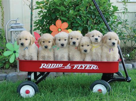 worldwide puppies the cutest puppies in the world