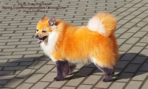 are foxes dogs best ideas about coloring rainbow coloring and rainbow on foxes