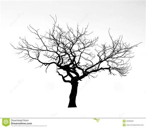 dead tree royalty free stock images image 23936059