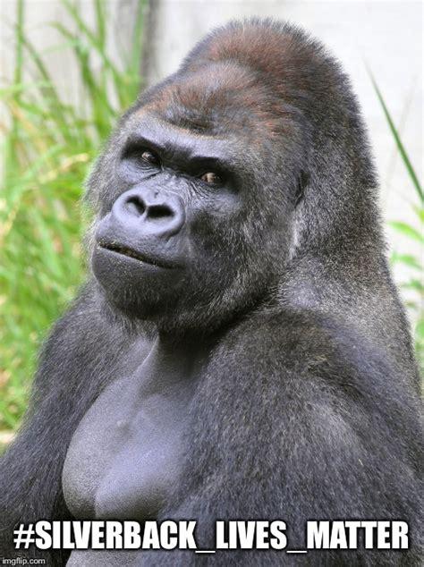 Gorilla Memes - hot gorilla latest memes imgflip