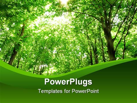 Summer Nature Sunlight In Trees Of Green Forest Forest Ppt Templates Free