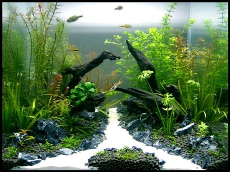 best substrate for aquascaping 17 best images about aquaria on pinterest tropical fish