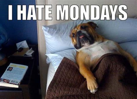 Mondays Meme - i hate mondays