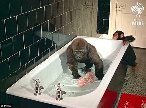 jumanji film online gratis subtitrat gorila joe film online gratis subtitrat in romana