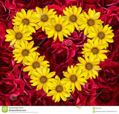 girasoli a testa in giù cuore dei fiori gialli dei girasoli decorativi helinthus e