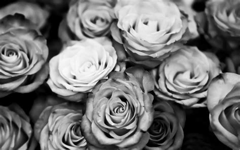 wallpaper black and white roses black and white roses desktop background hd 1920x1200