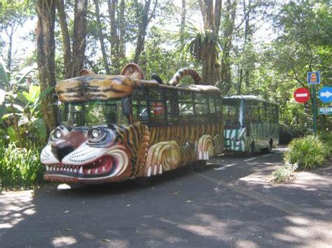 Taman Safari Cisarua taman safari indonesia cisarua the safari iddrskata