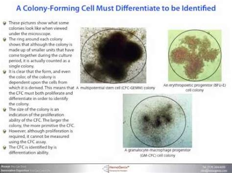 colony forming cell (cfc) or colony forming unit (cfu