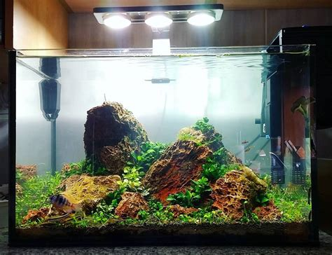 design aquascape murah www model aquarium terbaru 2014 design aquarium terbaru